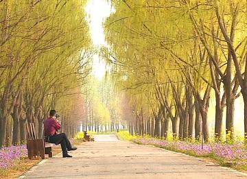 33秒|春和景明,万物竞发!枣庄台儿庄涛沟河湿地美如画