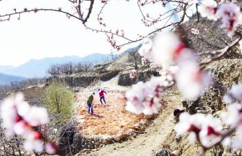 淄博:抢抓农时伴着花香开展春季农业生产