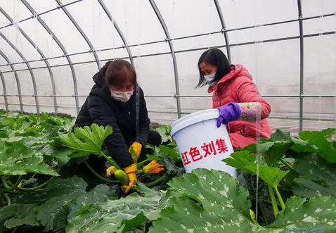 广饶县大王镇刘集后村:整合绿色产业 为乡村振兴添砖加瓦