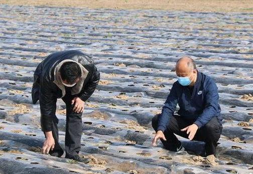 郝家镇:小草莓引领富民路 助力乡村产业振兴