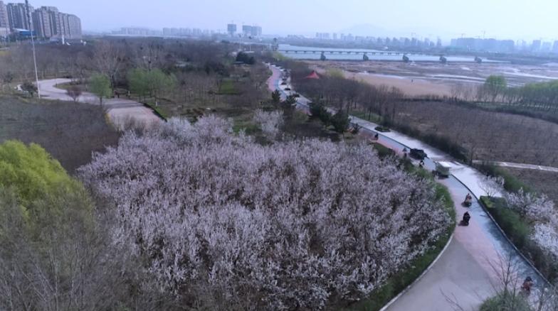 日照莒县沭河公园百花竞放满园春