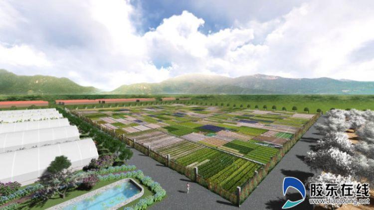 租种半分田体验田园乐 莱阳市河洛镇朱江村开创种植新模式