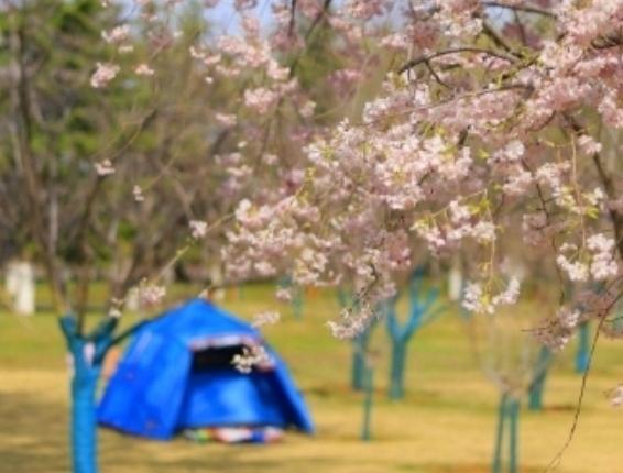 这是济南的春天 植物园春光惹人醉!