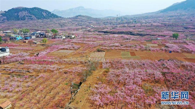 (春季美丽生态)(8)山东济南:万亩桃花笑春风