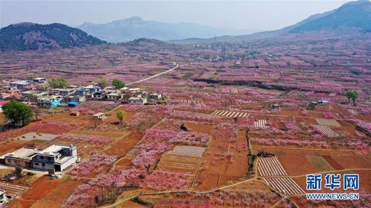 (春季美丽生态)(1)山东济南:万亩桃花笑春风