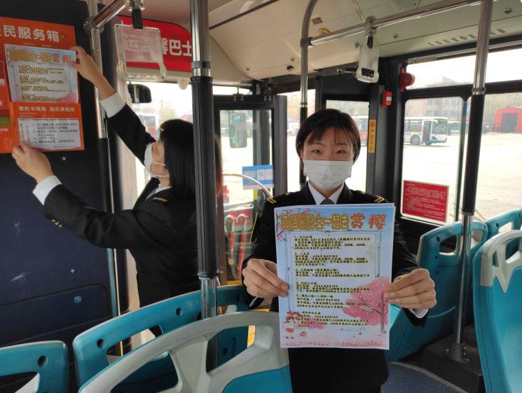 赏樱正当时!青岛市区赏花可乘坐这些公交线