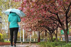 """降雨带来""""倒春寒""""淄博平均降水18.2毫米最大点30毫米"""