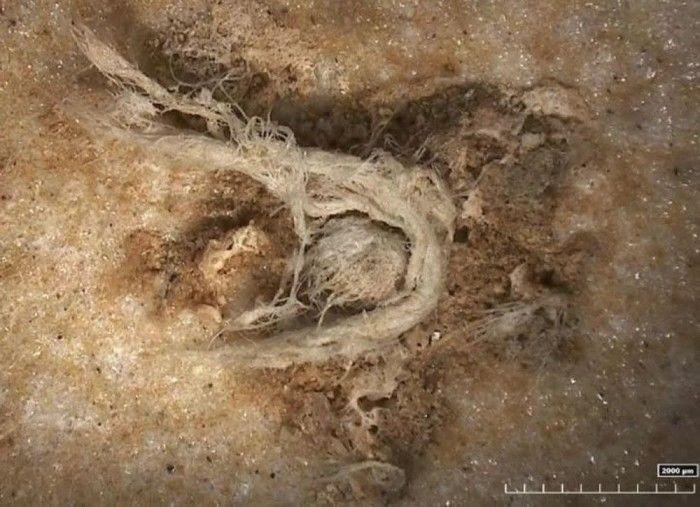 考古发现人类已知最古老细绳制作 距今4.1万至5.2万年