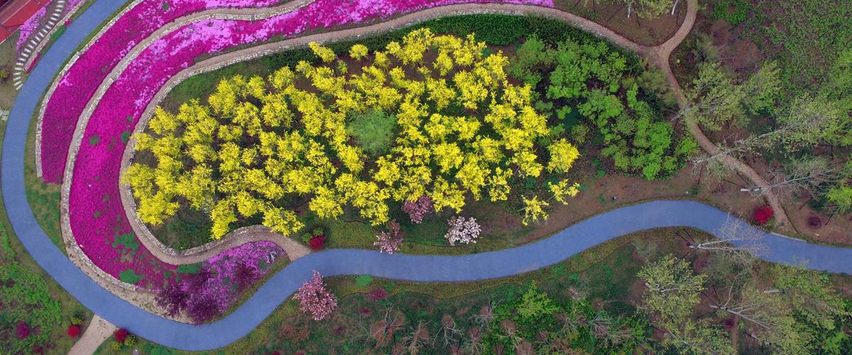 红花绿草春意盎然 日照绿地公园扮靓城市