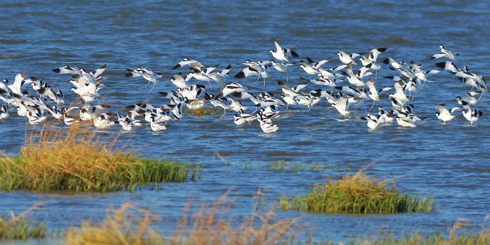 青岛:海洋公园内鱼欢鸟舞