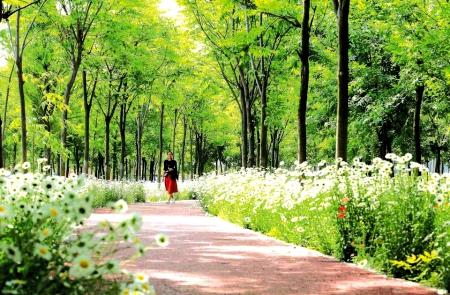 莒县:城市绿道提升生活品质