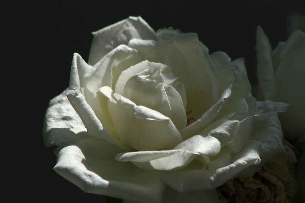 受疫情影响,有少部分花卉错过了花盛期的拍摄。因此,使用的上年的照片,请见谅。