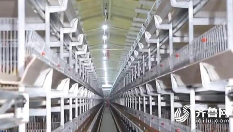 临沂市沂南县:环保倒逼肉鸭产业绿色转型