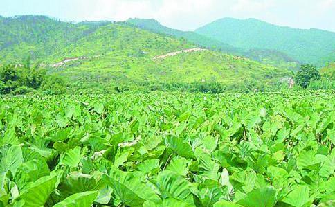 """破解""""买卖难"""" 青岛打造出新型农产品产销模式"""