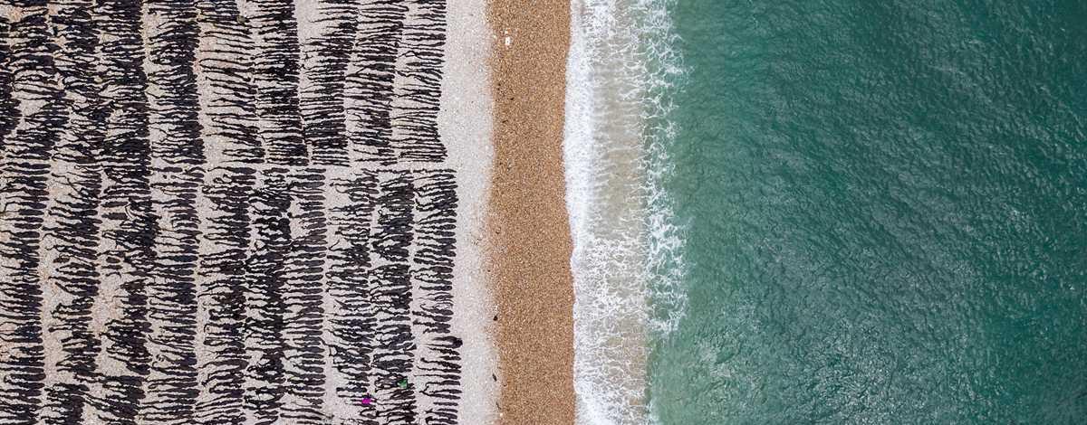 航拍烟台大钦岛海带收割晾晒忙