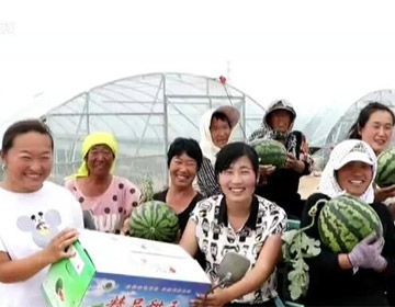 """【牢记嘱托 扎实实施乡村振兴战略】滨州90后女支书和种瓜""""女子天团"""""""