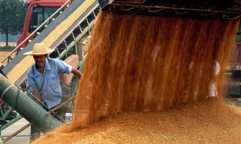 夏粮生产十七连丰 收获已到九成 量增质优价稳
