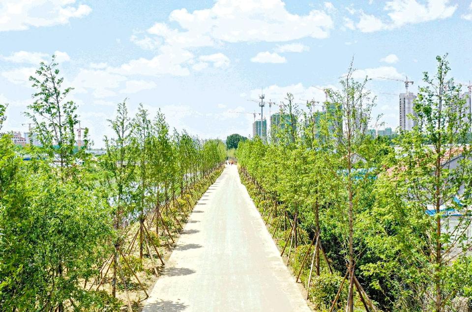 日照沙墩河绿化升级改造