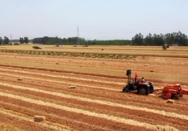 济宁523.8万亩小麦完成收获