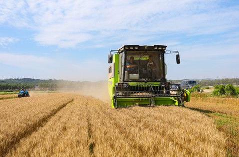 威海麦收近九成夏播过五成