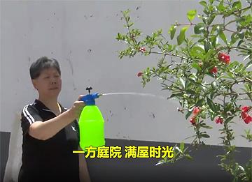 一方庭院,满屋时光!37秒视频看枣庄滕州的美丽庭院