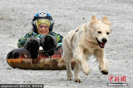资料图:俄罗斯狗拉雪橇比赛,参赛狗狗既矫健又蠢萌。图片来源:Sipaphoto版权作品 禁止转载