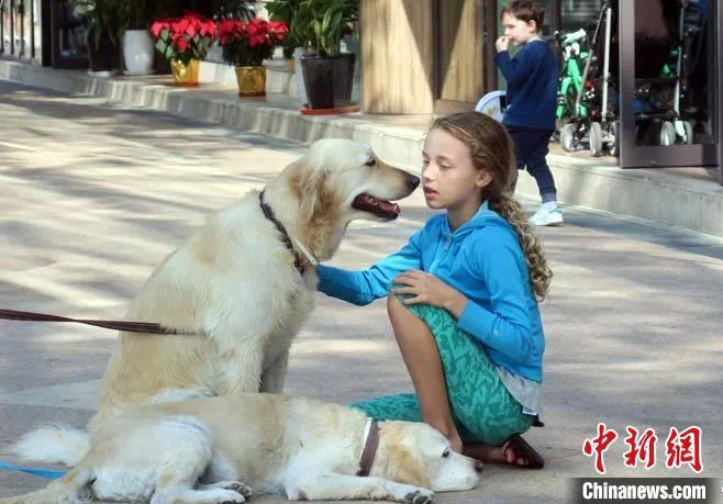 国际最新研究称,宠物狗或能改善幼童社交情绪发展