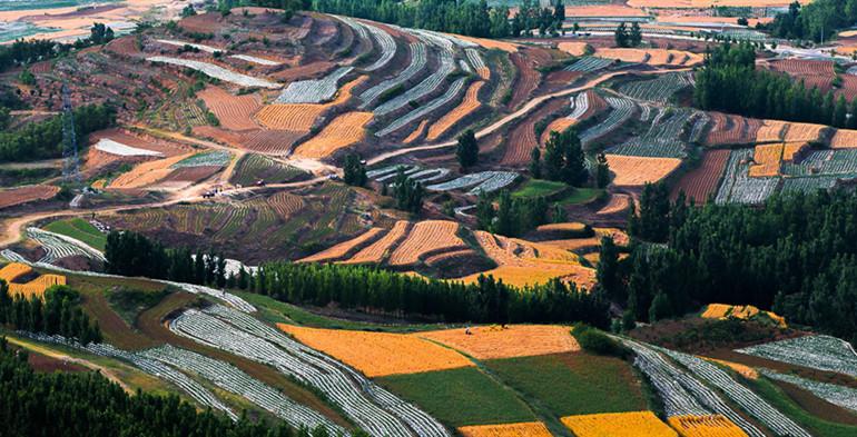 潍坊发放耕地地力补贴6.4亿元!提高至137.88元/亩