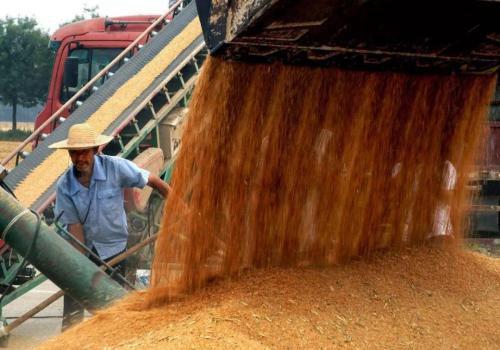 国家统计局:夏粮产量创历史新高