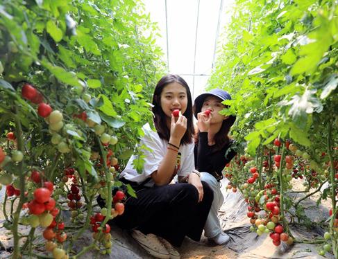 重点工程项目一线的报道|蔬菜大棚变身智能工厂