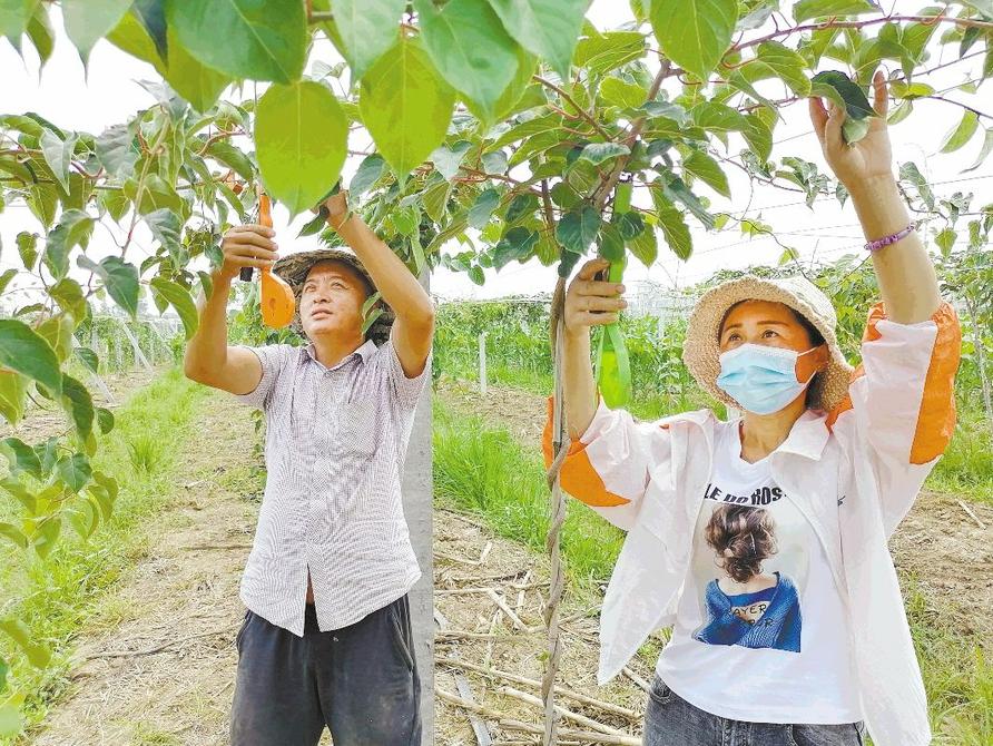 莒县:软枣猕猴桃铺就致富路