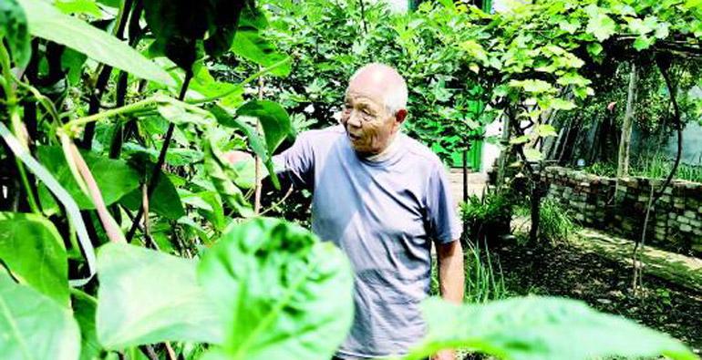 """""""扶贫小菜园""""一举多得!寿光将脱贫攻坚和人居环境提升有效结合"""