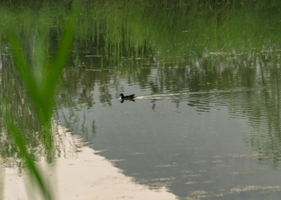 镜相 | 看济南华山湖不往往的静谧与唯美