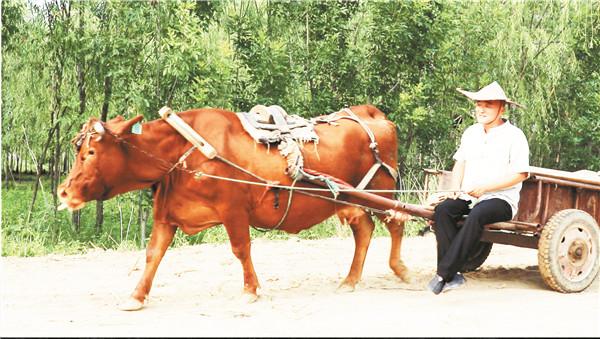 淄博:辞职副镇长 回村当农民 要带乡亲走上致富路