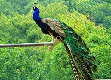 山东省确定13种在养禁食陆生野生动物,潍坊市为主要集中区域