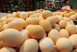 """潍坊:蛋价""""发飙"""" 不到一周每斤上涨一元左右"""