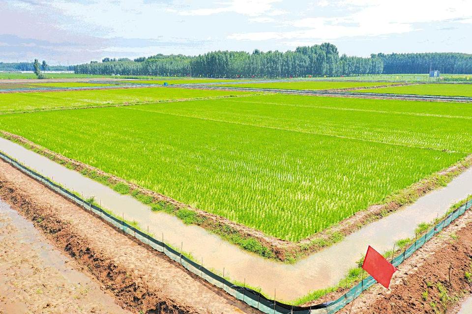 莒县:生态综合种养 推进农业转型升级