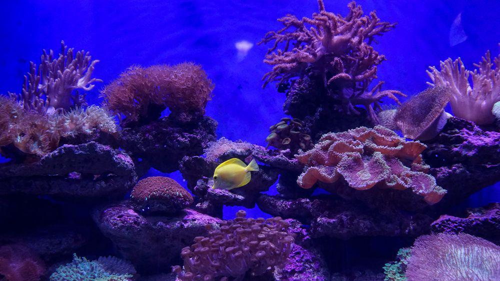 打卡青岛水族馆 认识青岛认识海洋从这里开始吧