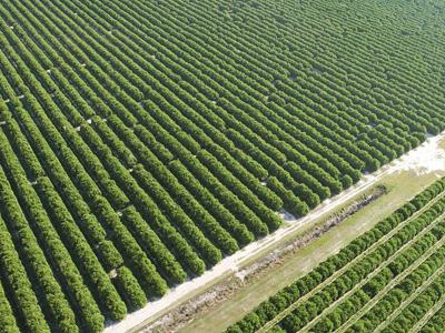 3000万元中央资金支持高标准农田建设 淄博去年完成24万亩建设任务