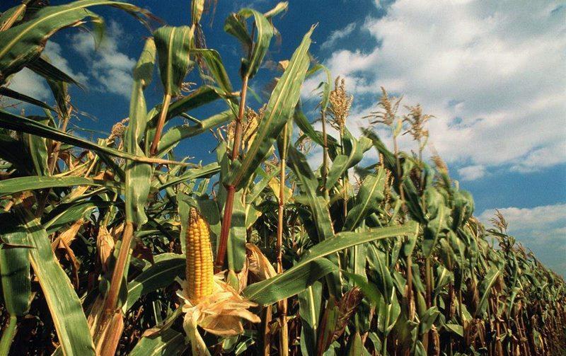 秋粮长势较好生猪存栏恢复 农业经济延续向好态势