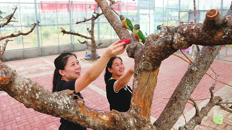 依托生态农业科技示范园项目,聊城大杨村集体收入增加8万余元