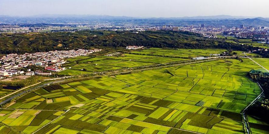 陕西洋县:俯瞰稻田