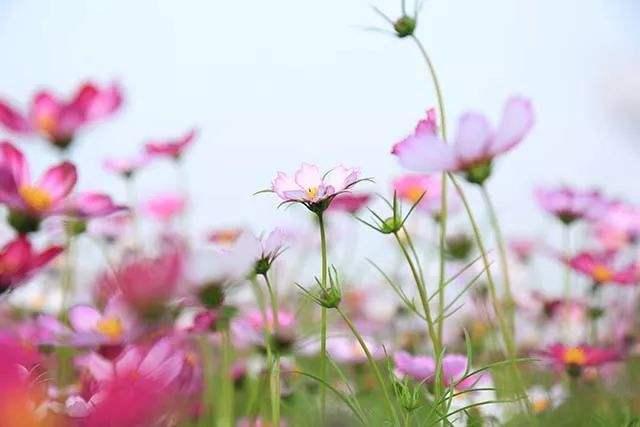 东营凤凰城街道:文明和谐之花开遍乡野