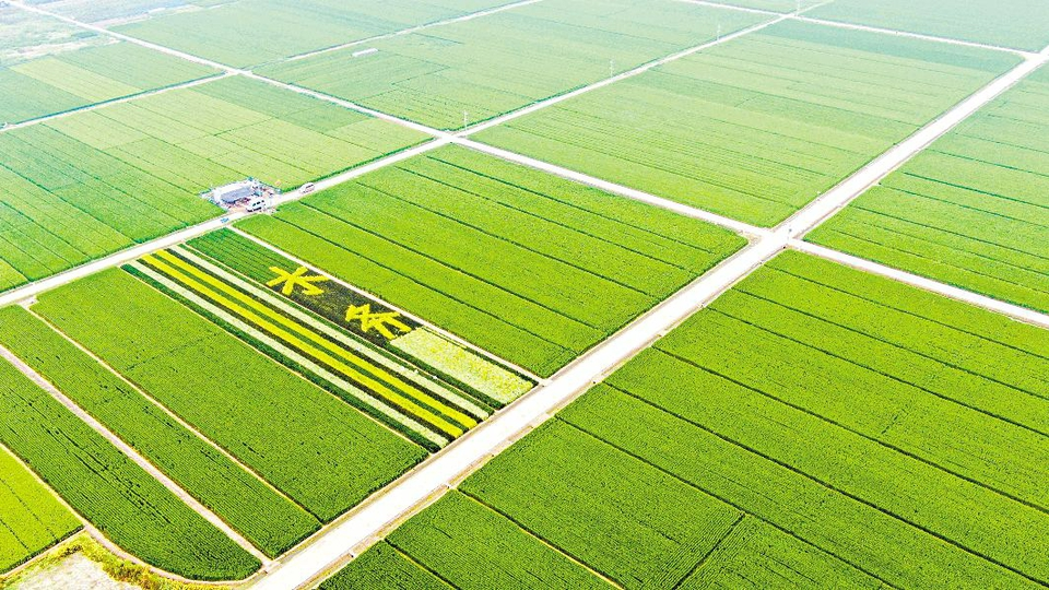日照东港:多彩稻田激发乡村活力