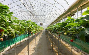 """潍坊寿光营里镇推""""三种模式""""撑起万亩蔬菜园区"""