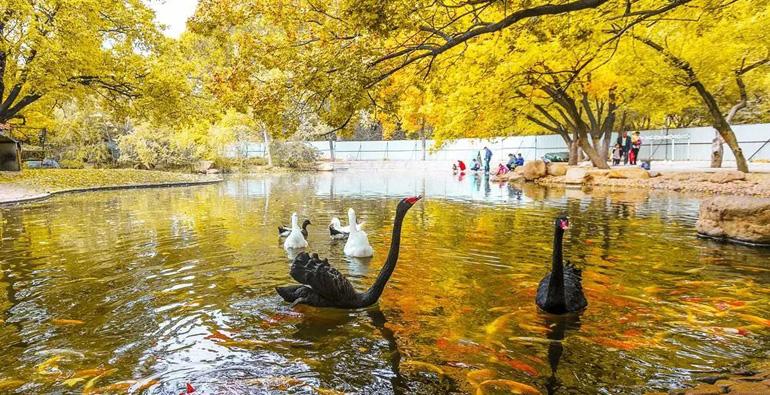 绝美!再过一个月,潍坊的秋天又将惊艳众人