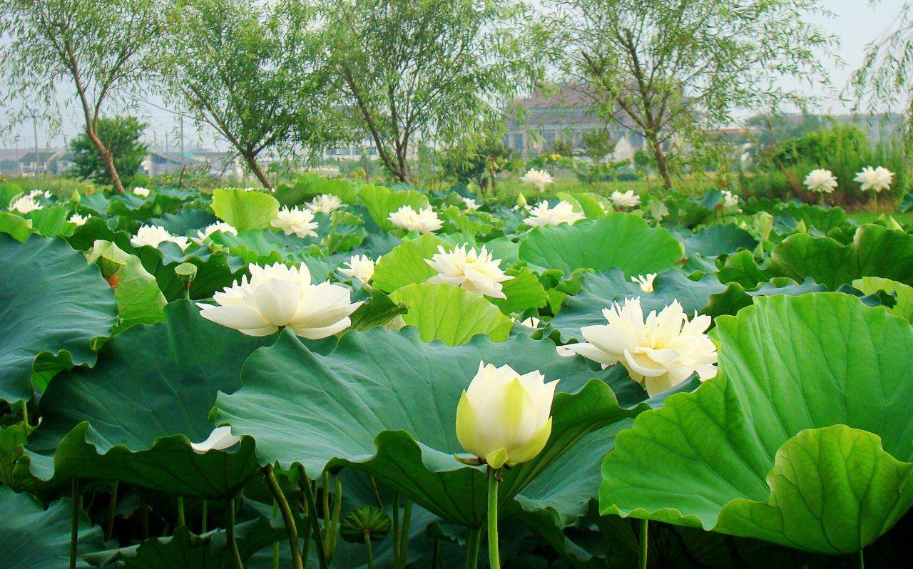 利津县刁口乡:生态绿色田园美 宜居村居靓起来