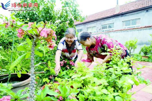 岞山街道东夏湾村村民在察看花卉植株生长情况。