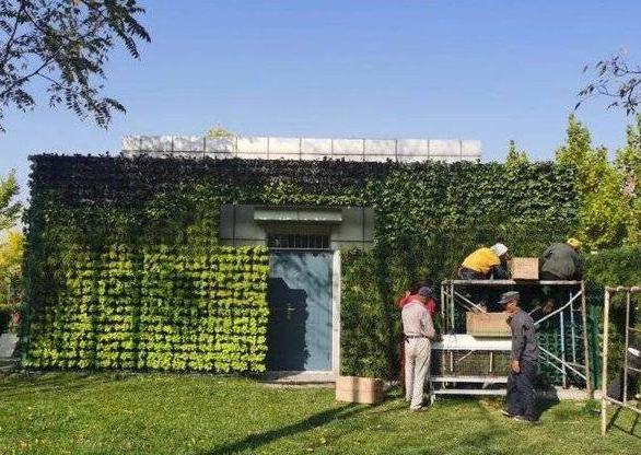 """公厕穿上""""绿衣裳"""" 立体绿化项目在东营""""生根发芽"""""""