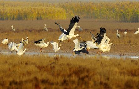 黄河三角洲自然保护区生态保护与修复的东营实践